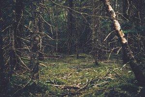 Green Island Forest