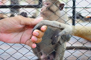 man touch hand together with monkey