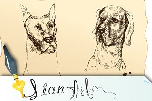 4 Dogs heads- dalmatian, bloodhound