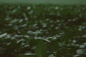 Green Leaves Vertical