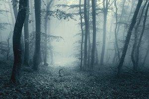 Magic forest in fog