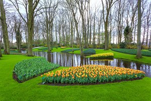 Blooming flowers in Keukenhof park