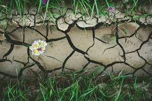 Dry crack ground with flowers