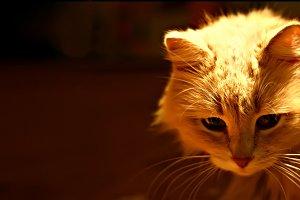 evening cat