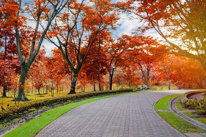 Colorful of the autumn in pedestrian