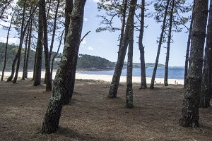 Small forest on the beach do lago