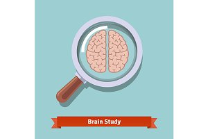 Brain research and education concept