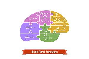 Puzzle brain functions