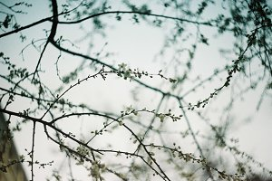 Subtle spring sky