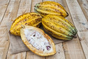 Cocoa seed tender