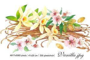 "Watercolor ""Vanilla and almonds"""
