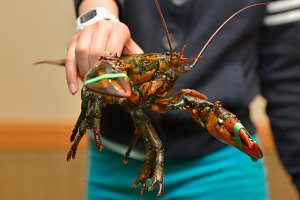 Raw lobsters