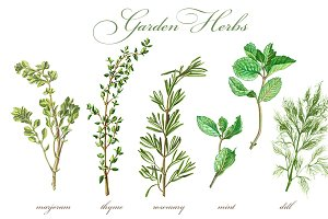 Garden Herbs Set Pencil Drawing