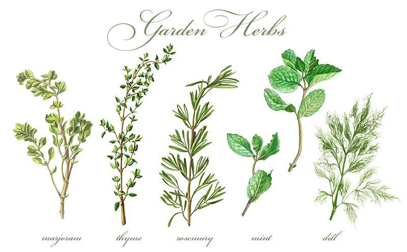 Garden Herbs Set Pen