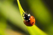 Beetles ladybug in green grass