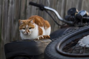Red cat sitting on the old bike