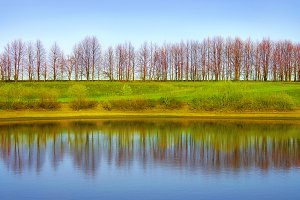 Reflection trees