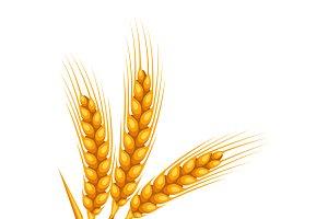Bunch of wheat, barley or rye ears.
