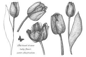 Ink hand drawn tulip flower sketch