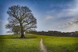 An English Field