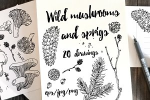 Wild mushrooms and sprigs