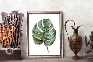 15 BIG tropical leaves