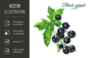 Watercolor black currant