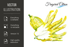 Fingered citron
