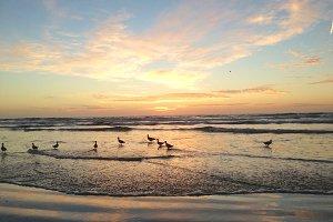Birds enjoying a Sunset