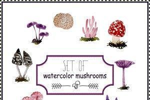 Set of watercolor mushrooms