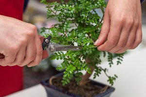 Pruning a bonsai