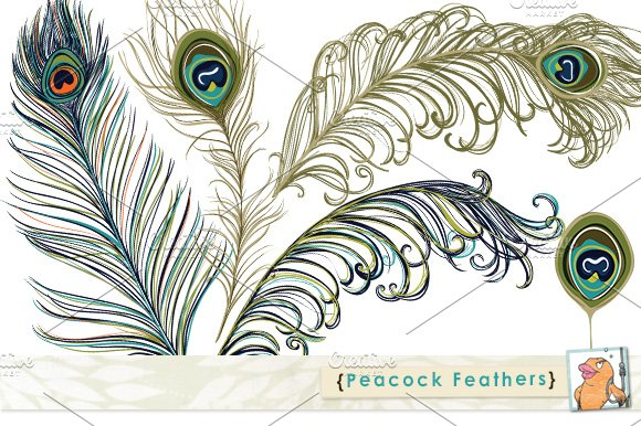 clipart pictures peacock - photo #43