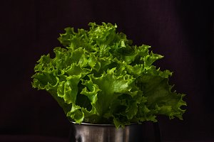 Fresh leaf lettuce