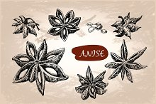 Anise. Set of vector illustrations
