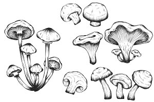 Mushrooms hand drawn set isolated