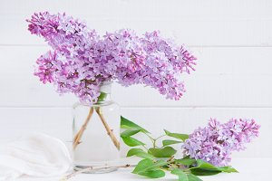 Purple flowers of lilac