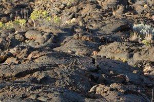 volcanic landscape in El Hierro.