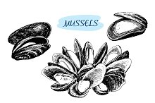 Mussels. Set of vector illustrations