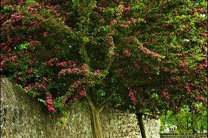 Bench under Flowering Tree