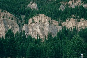 Cliff Amongst Trees
