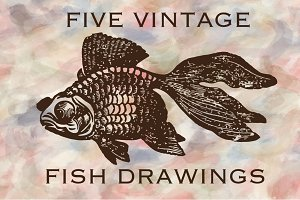 5 Vintage Fish Drawing