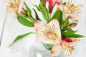 Flower alstroemeria in glass vase