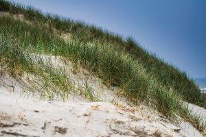 Atlantic coast dune