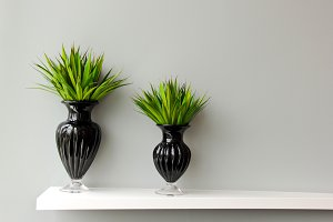 Green plant in black vase