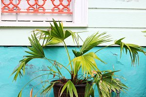 Tropical Porch Plant