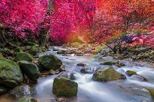 Waterfall in deep rain forest