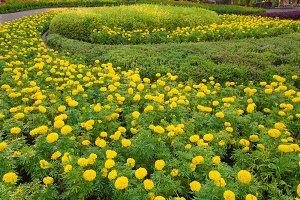 beautiful garden flowers.