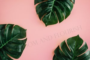 Monstera-Tropical Summer Collection