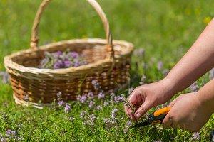 Herbs growing up in meadow