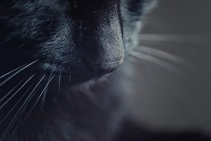 Black cat nose